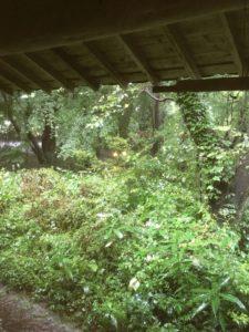 店内から見た外の様子。森の中。